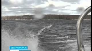 Белые амуры очистят Десногорское водохранилище