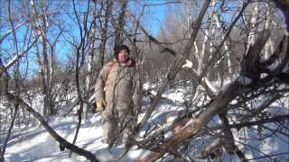 Канада. Январская охота по морозу на зайчишек.