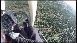 Сбор елок на вертолете в штате Орегон.