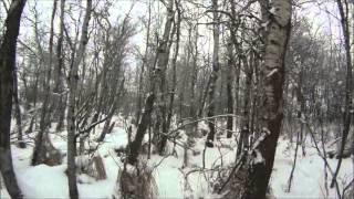 Охота на койотов в январе. Дядя Вова Канада.