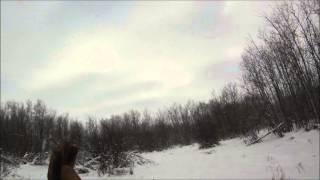 Охота на зайчишек на Новый год. Канада.