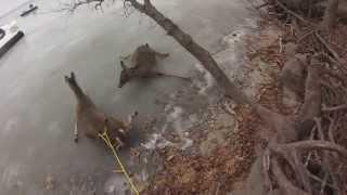 Спасение оленей на озере возле городка Albert Lea