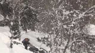 Ёлки палки лес густой