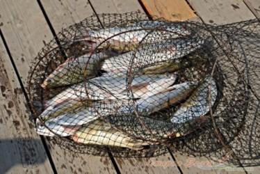Рыбалка в Таганроге.