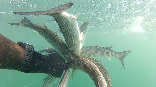 Подводная охота - Черное Море 29.03.14