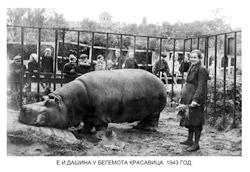 Из хроник Ленинградского зоопарка блокада зима 1941