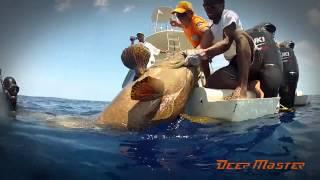 Deep master team Мадагаскар 2