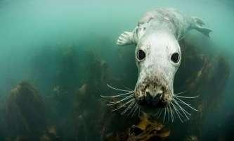 Знакомство с тюленями вблизи острова Фарн
