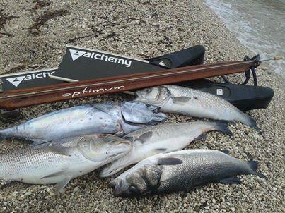 Οptimum ружья для подводной охоты фирмы Алхимия