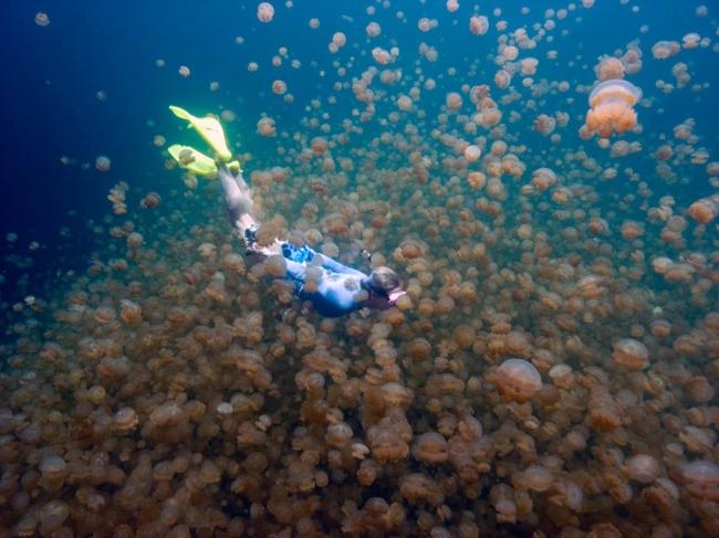 Затерянное озеро медуз