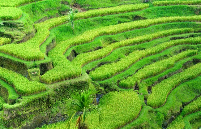 Индонезия. Остров Сулавеси и Калимантане.
