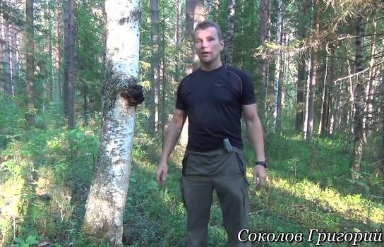 Соколов Григорий - три трута от берёзы