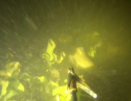 Ночная подводная охота Олега Литвинова