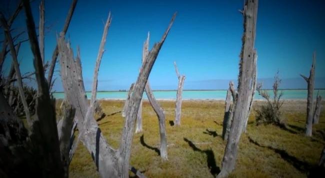 Мадагаскар 2 в поисках Марлина - фильм Олега Ляденко