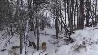 Дядя Вова охотится на койотов. Декабрь 2014. Канада.