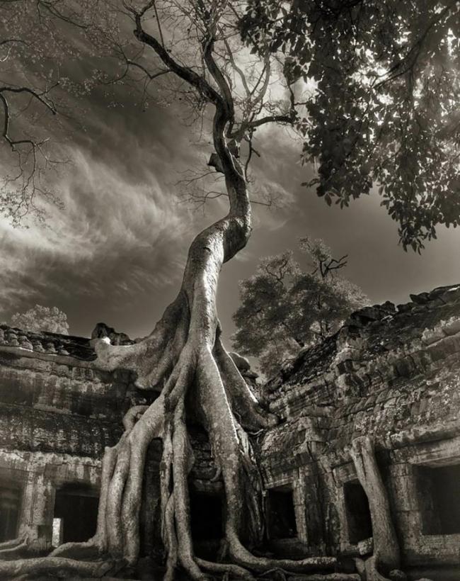 Самые древние деревья