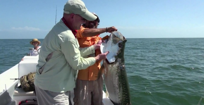 Диалоги о рыбалке: Тарпон