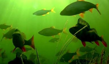 Великий Канал Ирландии - Подводная съёмка.