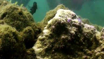 Коралловые сады