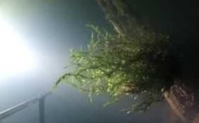 Река Илеть - подводная охота