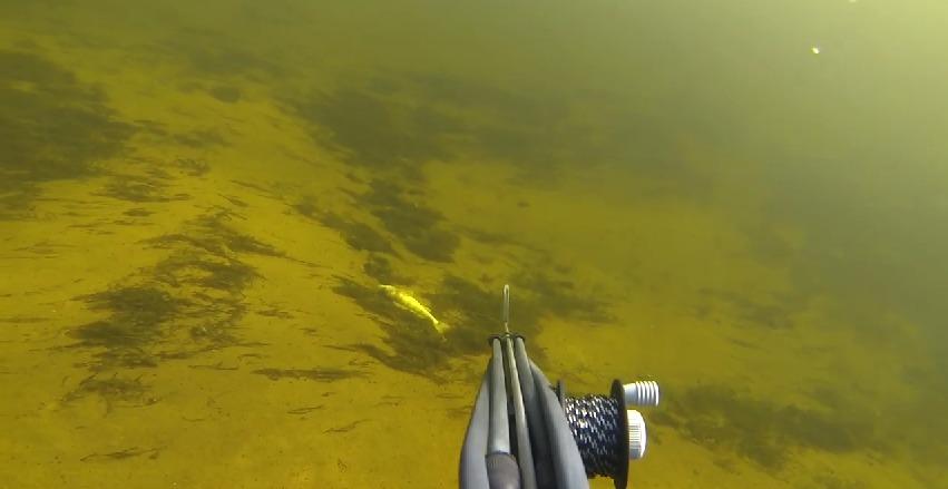 Подводная охота волгоград