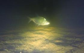 Зимняя рыбалка ночью - подводное видео подо льдом
