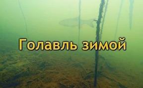 Голавль зимой, подводное видео в Подмосковье