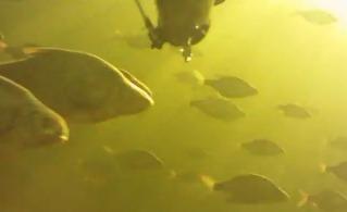 Весенняя Волга - подводная охота с Александром Уткиным