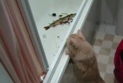 Кошка Буся и Щука - видео Алексея Крылова