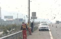 ДТП в Китае: пострадали тысячи пчел и десятки милиционеров