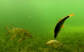 Рыбалка: щука и приманки.