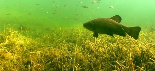 Рыбалка в Ирландии: щука, линь, окунь, лещ, плотва.