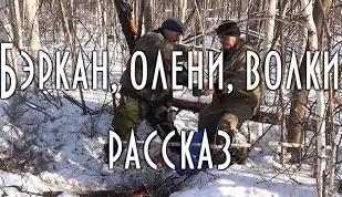 Бэркан, олени, волки. Рассказ Николая Абоимова