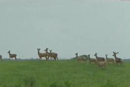 На охотничьей тропе: Охота на благородного оленя.