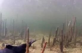 Роман Болдов: Подводная Охота 2015 и досадные промахи