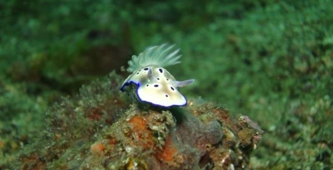 Сулавеси: Море причудливых существ.