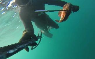 Очень красивое видео о подводной охоте