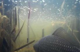 Поймал отпусти если рыба готовится к нересту