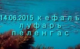 Южный берег Крыма кефаль, луфарь, пеленгас