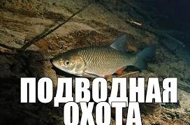 Игорь Приходько: Подводная охота сом, голавль и окуня.