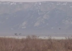 Охота на утку в Казахстане