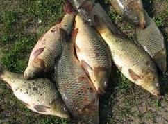 Карпрвая ловля, соревнование рыболовов
