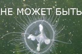 Alex Grom: медуза в реке