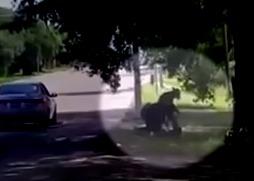 Видео ареста погибшей чернокожей Сандры Блэнд