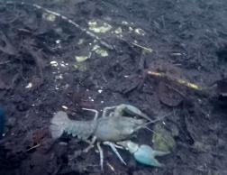 Мир охотника: Подводная охота #26 рыбное озеро
