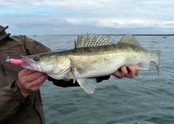 Рыбалка на судака, ловля судака на джиг