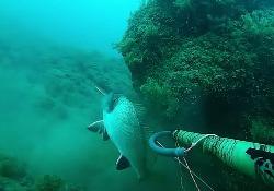 Вячеслав Мелихов: Подводная охота на Чёрном море, август 2015