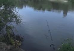 Дневник рыболова: Ловля толстолоба со дна