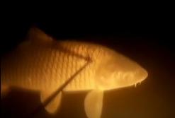 Макс Giperdive: Приземление - тактический прием подводной охоты