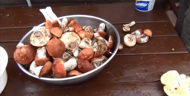 Канадский бирюк. Часть 41. Грёбаные грибы